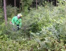 森林整備(下刈り)