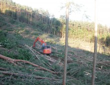 森林整備(樹種転換のための伐出)
