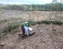 森林整備(植林)